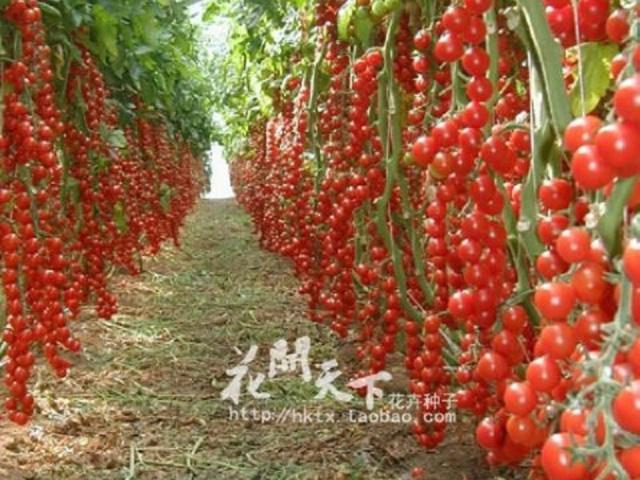 Vypestujte si bylinky, kvety, zeleninu, alebo ovocie od semienka