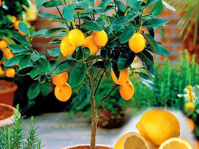 Vypestujte si zdravú zeleninu a ovocie z pohodlia domova