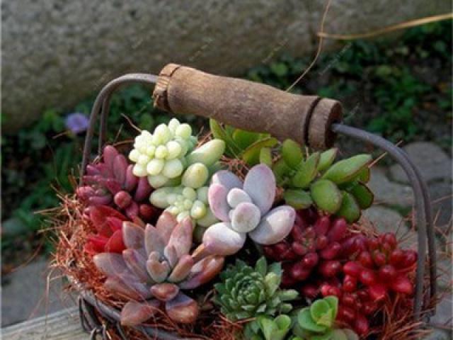 Farebné mini bonsaje prinesú do vášho príbytku dávku jarného osvieženia