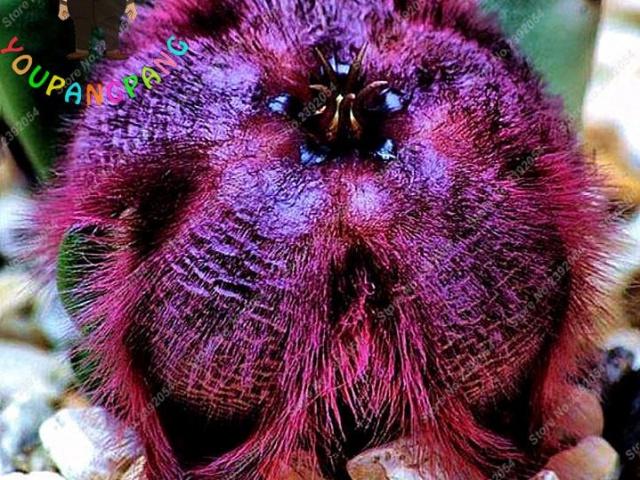 Kvetinové semená na sade: Okrášlite svoju záhradu týmito skvostami